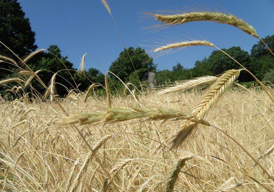ALSIA, Premio Enzo Laganà per il miglior agricoltore custode della agrobiodiversità della Basilicata nel 2020