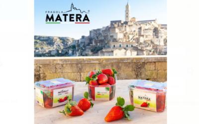 Nuovo marchio nella fragolicoltura lucana di qualità: nasce Fragola Matera®